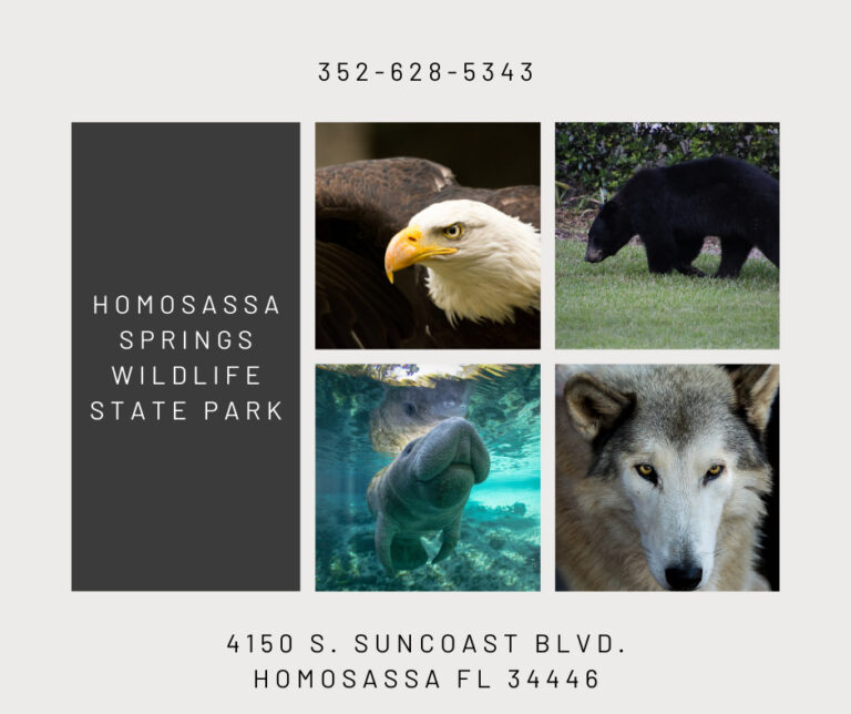 collage of wild animals including eagle, wolf, manatee and black bear